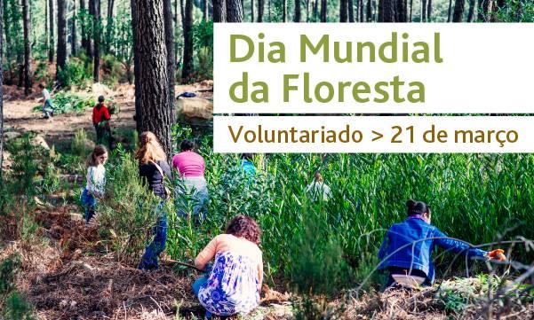 Dia Mundial da Floresta Voluntariado Sintra