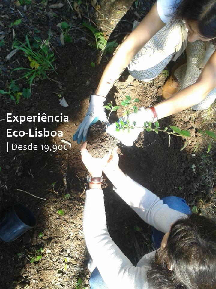 Experiência Eco-Lisboa - Passeio TukTuk + Plantação de Árvore