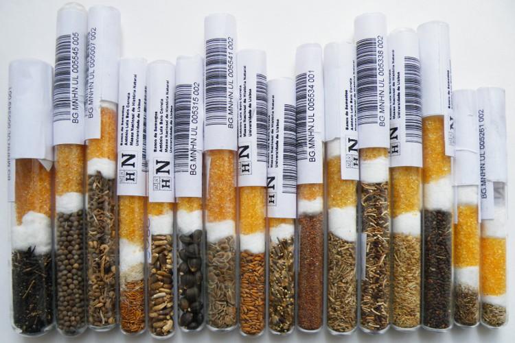 banco-de-sementes